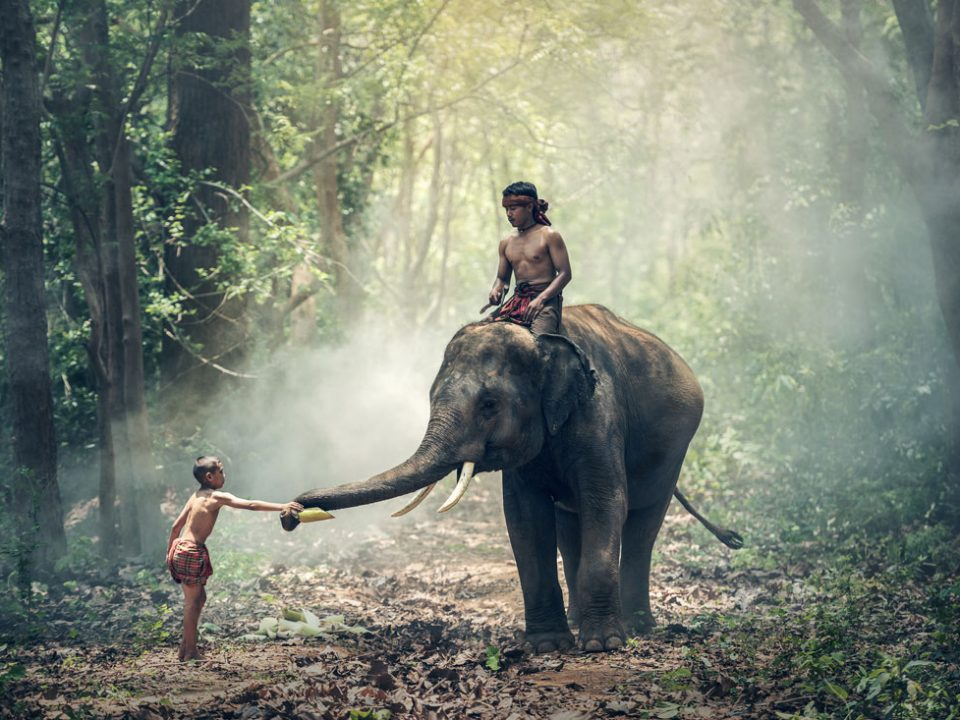 elephant-1822481